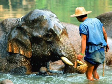 Elephant Camp in Myanmar