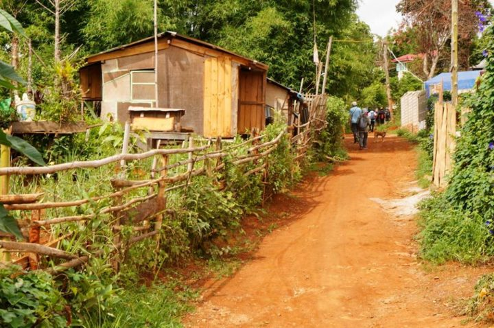 On the way trekking from Kalaw to Inle Lake