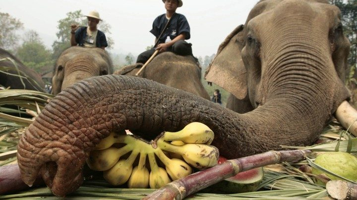 Travel to Elephant Camp for Unique Experience in Myanmar